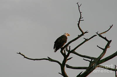American Photograph - Eagle View  by Neal  Eslinger