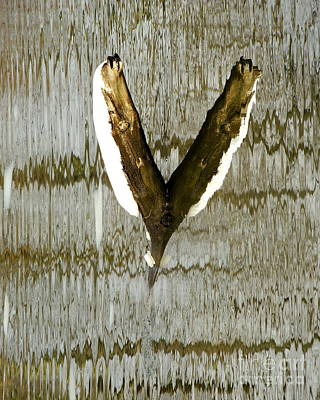 Eagle Wings Print by Marcia Lee Jones