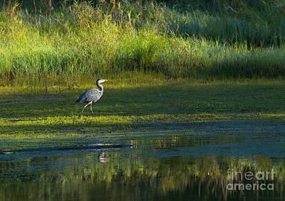 Heron Digital Art - Early Morning At The Marsh 2a by Sharon Talson