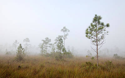 Slash Photograph - Early Morning Fog Landscape-1 by Rudy Umans