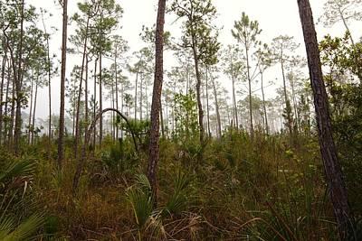 Slash Photograph - Early Morning Fog Pine Land by Rudy Umans