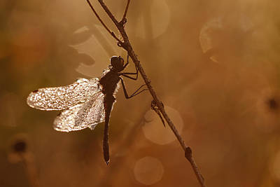 Dragonfly Photograph - Early Morning Magic by Roeselien Raimond