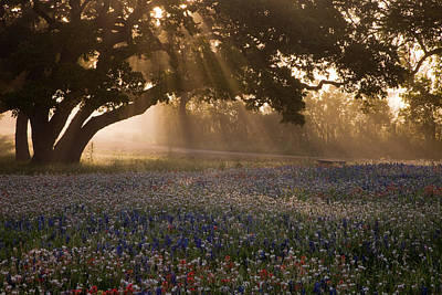 Early Morning Rays Print by Eggers   Photography
