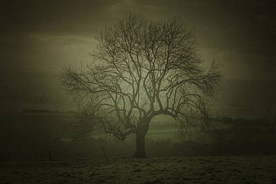 Early Morning Tree Art Print by Chris Fletcher