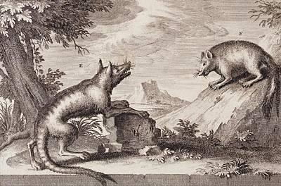 East India Photograph - Early Tasmanian Wildlife by Paul D Stewart