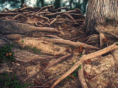 Tree Roots Photograph - Earthbound by Wendy J St Christopher
