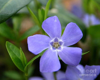 Floral Photograph - Easter Blues  by Neal  Eslinger