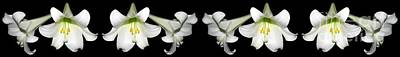 Easter Lilies Panorama Print by Rose Santuci-Sofranko