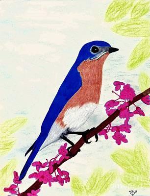 Bluebird Drawing - Florida - Eastern - Blue Bird by D Hackett