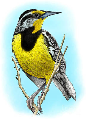 Eastern Meadowlark Print by Roger Hall
