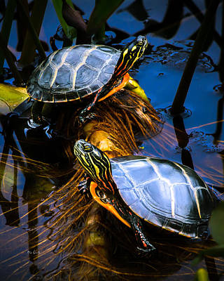 Pond Turtle Photograph - Eastern Painted Turtles by Bob Orsillo