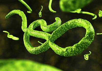 Ebola Virus Particles Print by Crown Copyright/health & Safety Laboratory Science Photo Library