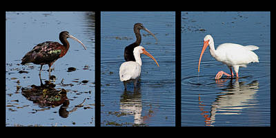 Collage Photograph - Ebony And Ivory by Dawn Currie
