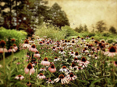 Cone Digital Art - Echinacea Garden by Jessica Jenney