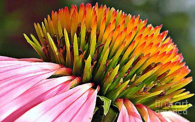 Echinacea In  Watercolors  Print by Chris Berry