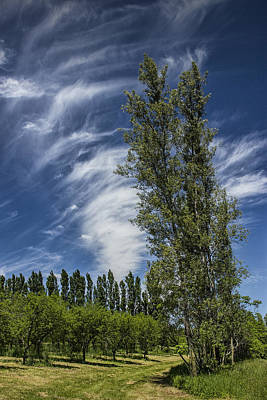 Edge Of An Orchard In West Michigan With Cirrus Clouds Print by Randall Nyhof