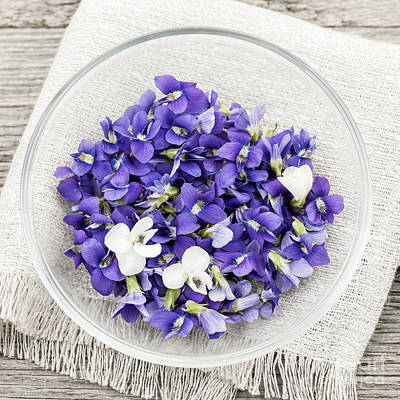 Edible Violets  Print by Elena Elisseeva