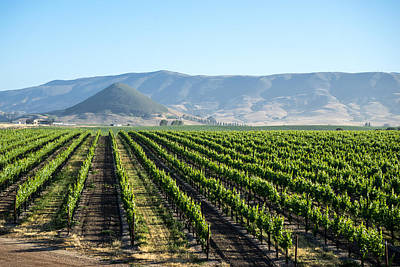 Winery Photograph - Edna Valley Vineyard by Priya Ghose