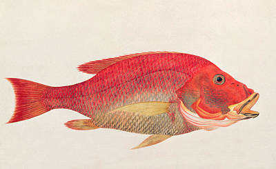 Tropical Fish Painting - Eekan Bambangan by Chinese School