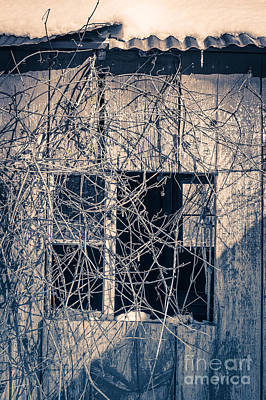 Twisty Photograph - Eerie Old Shack by Edward Fielding