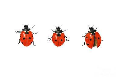 Ladybug Drawing - Egn884169 by Ele Grafton