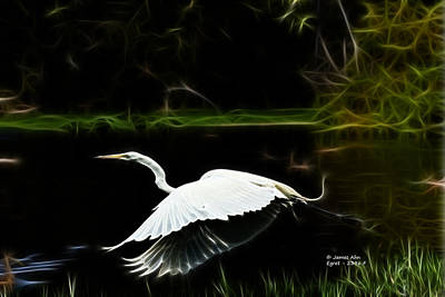 Egret 2396 F Print by James Ahn