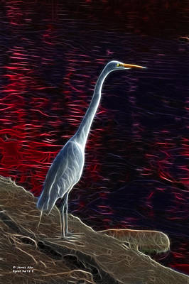 Egret - 3678 F Print by James Ahn