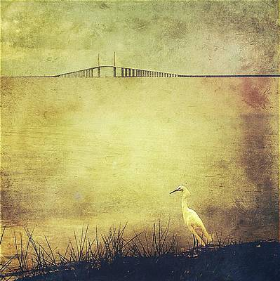 Egret At The Skyway Bridge Print by Beth Williams