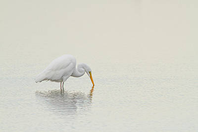 Yellow Beak Photograph - Egret Finds Himself by Karol Livote