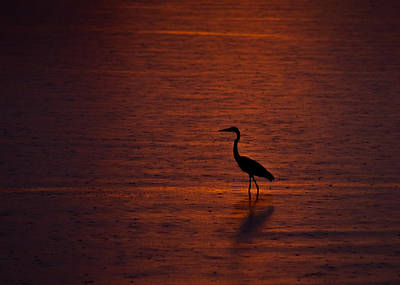 Egret In Red Print by Jeff Turpin