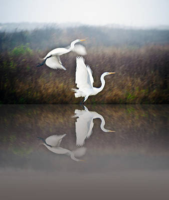 Egrets In The Fog Print by John Collins