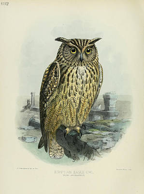 Egyption Eagle Owl Print by J G Keulemans