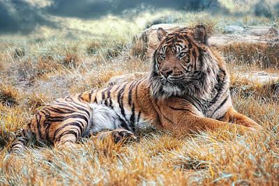 Sumatra Photograph - El Tigre by Joachim G Pinkawa