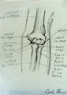 Human Joint Drawing - Elbow by Derek Allen Odom