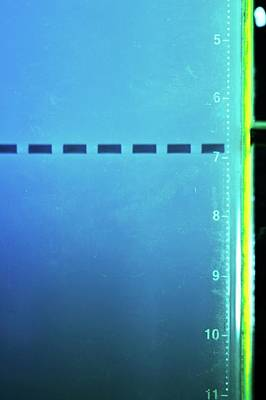 Gel Photograph - Electrophoresis Gel by Mcs