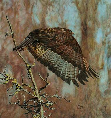 Buzzard Drawing - Elegance by Bernd Huss