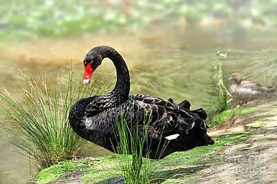 Elegance In Black Original by Kaye Menner