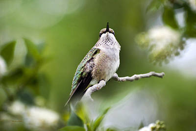 Digital Art - Elegant Hummingbird by Christina Rollo