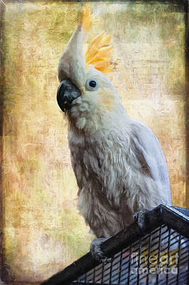 Cockatoo Photograph - Elegant Lady by Lois Bryan