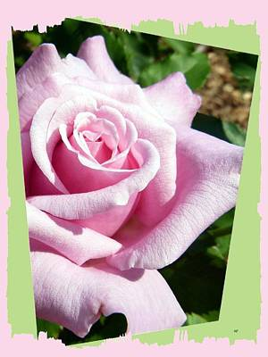 Elegant Royal Kate Rose Print by Will Borden