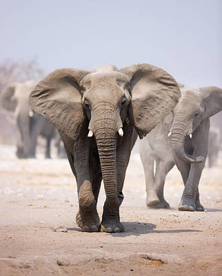 Elephant Bathing Print by Johan Swanepoel