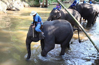 Elephant Baths - Maesa Elephant Camp - Chiang Mai Thailand - 01131 Print by DC Photographer