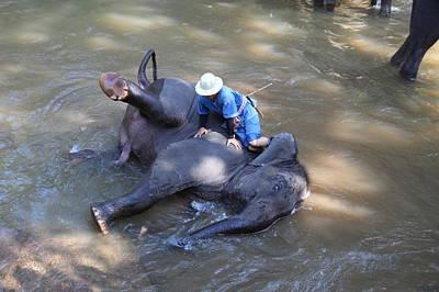Bath Photograph - Elephant Baths - Maesa Elephant Camp - Chiang Mai Thailand - 011311 by DC Photographer