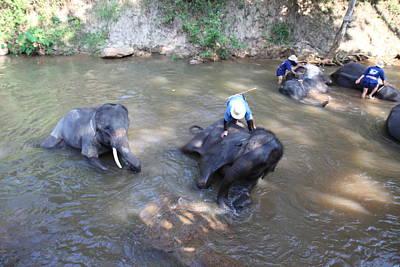 Bath Photograph - Elephant Baths - Maesa Elephant Camp - Chiang Mai Thailand - 011318 by DC Photographer