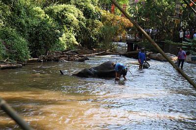 Bath Photograph - Elephant Baths - Maesa Elephant Camp - Chiang Mai Thailand - 011320 by DC Photographer