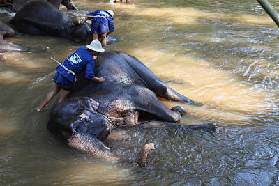 Elephant Baths - Maesa Elephant Camp - Chiang Mai Thailand - 011321 Print by DC Photographer