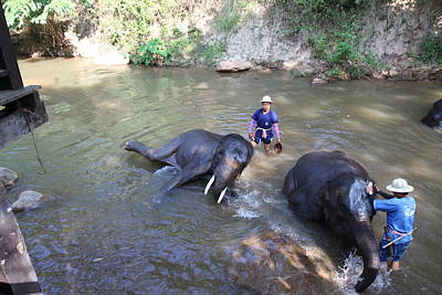 Bath Photograph - Elephant Baths - Maesa Elephant Camp - Chiang Mai Thailand - 011323 by DC Photographer