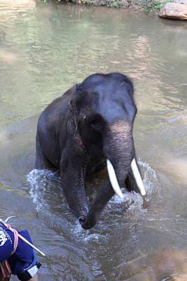 Elephant Baths - Maesa Elephant Camp - Chiang Mai Thailand - 011327 Print by DC Photographer