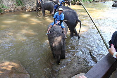 Elephant Baths - Maesa Elephant Camp - Chiang Mai Thailand - 01137 Print by DC Photographer
