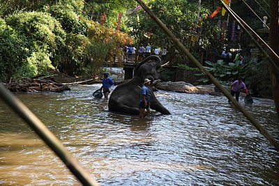 Elephant Baths - Maesa Elephant Camp - Chiang Mai Thailand - 01139 Print by DC Photographer
